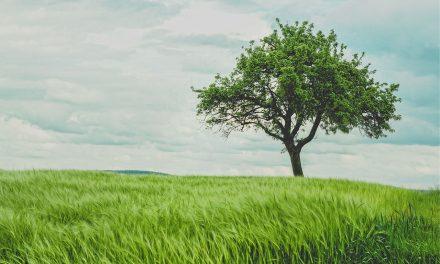 Środki ochrony roślin – czym tak właściwie są?