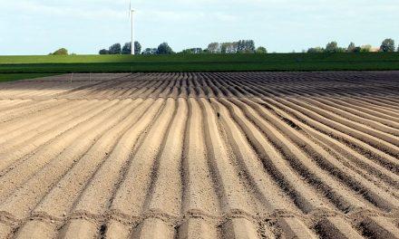Nawozy fosforowe – charakterystyka, zastosowanie
