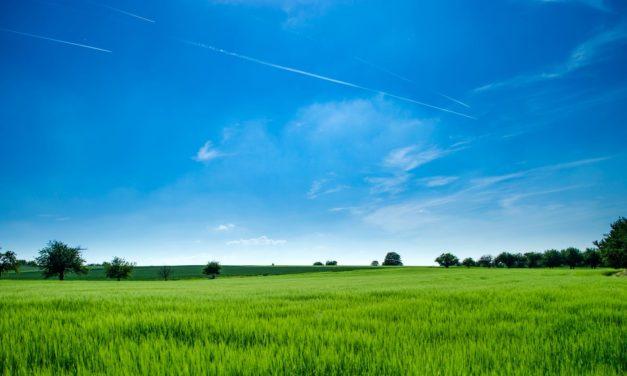 Zakup sprzętu czy wynajem? Co bardziej opłaca się rolnikom?