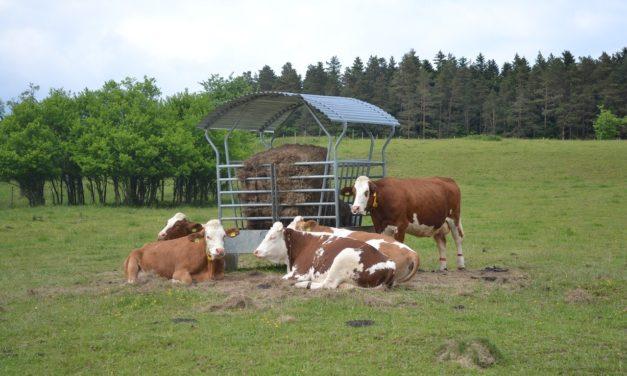 Paszowozy a prawidłowe żywienie zwierząt
